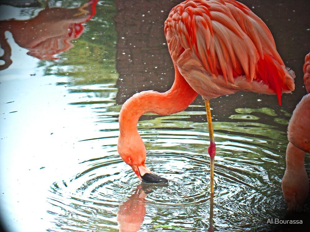 Flamingo Swirl by Al Bourassa