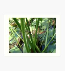 Swamp Spreadwing Art Print