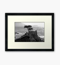 Lone Cypress--Monterey California  Framed Print