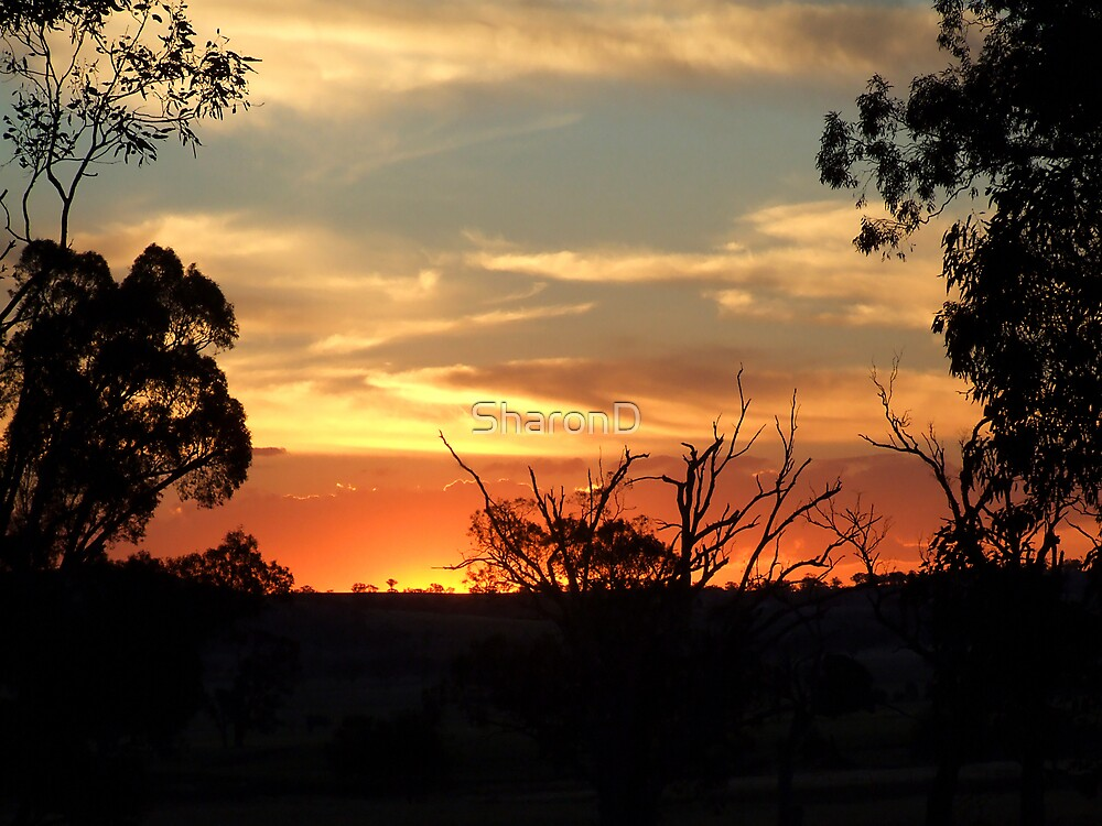 Sunset Silhouettes by SharonD