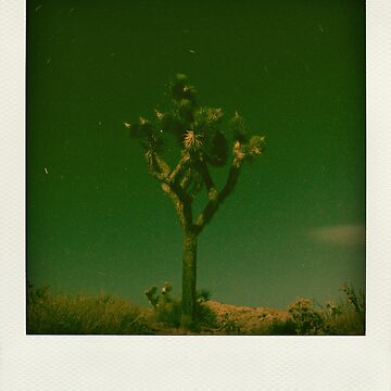 Yucca Trails by Graphsis