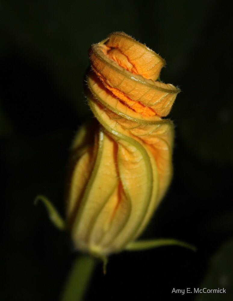 Pumpkin Flower 2 by Amy E. McCormick