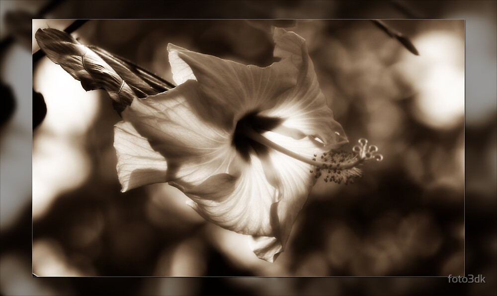 Diffused Flower by foto3dk