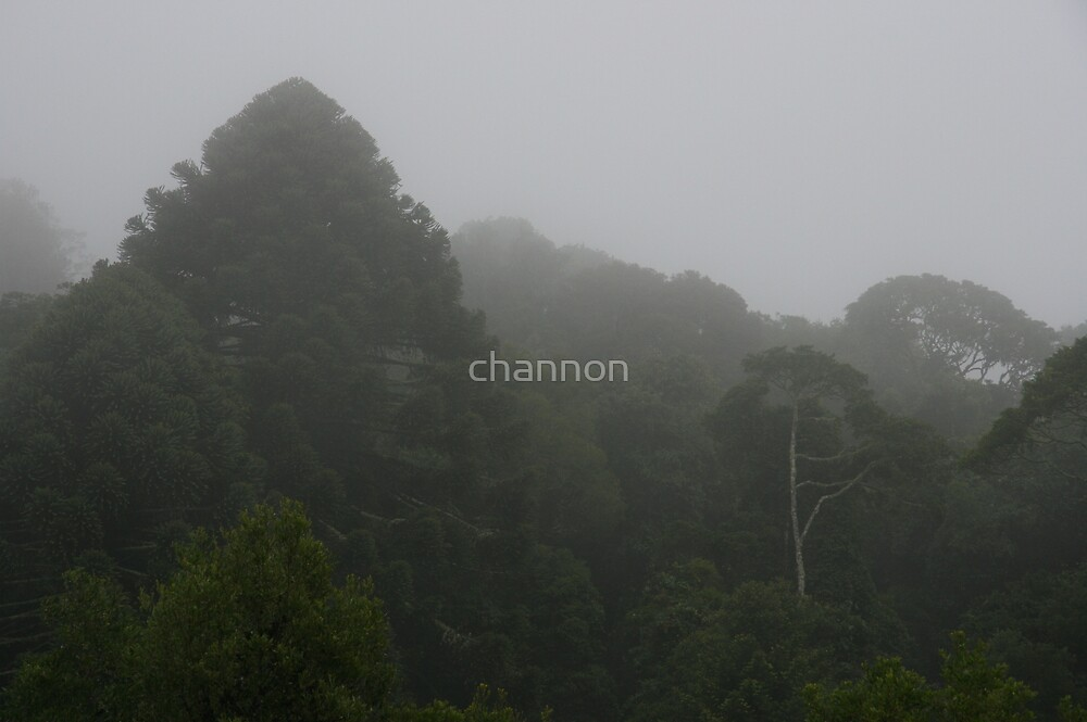 Bunya Mountains waking up by channon