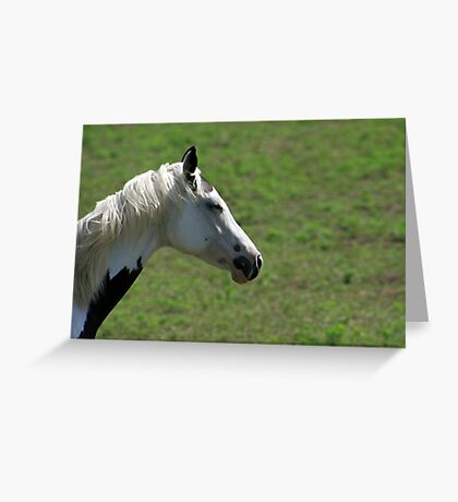 ...sleepy horse.... Greeting Card