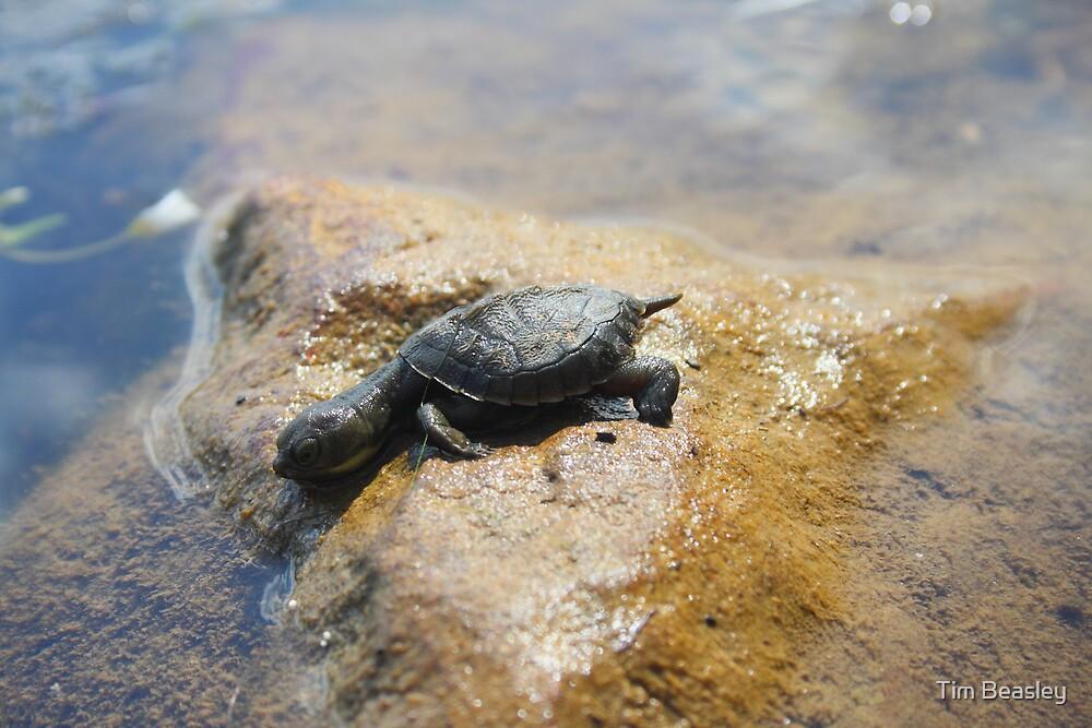 Baby Turtle Island by Tim Beasley