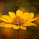 Yellow Daisy with Texture. by Karen  Betts