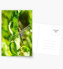 Dragonfly Postcards