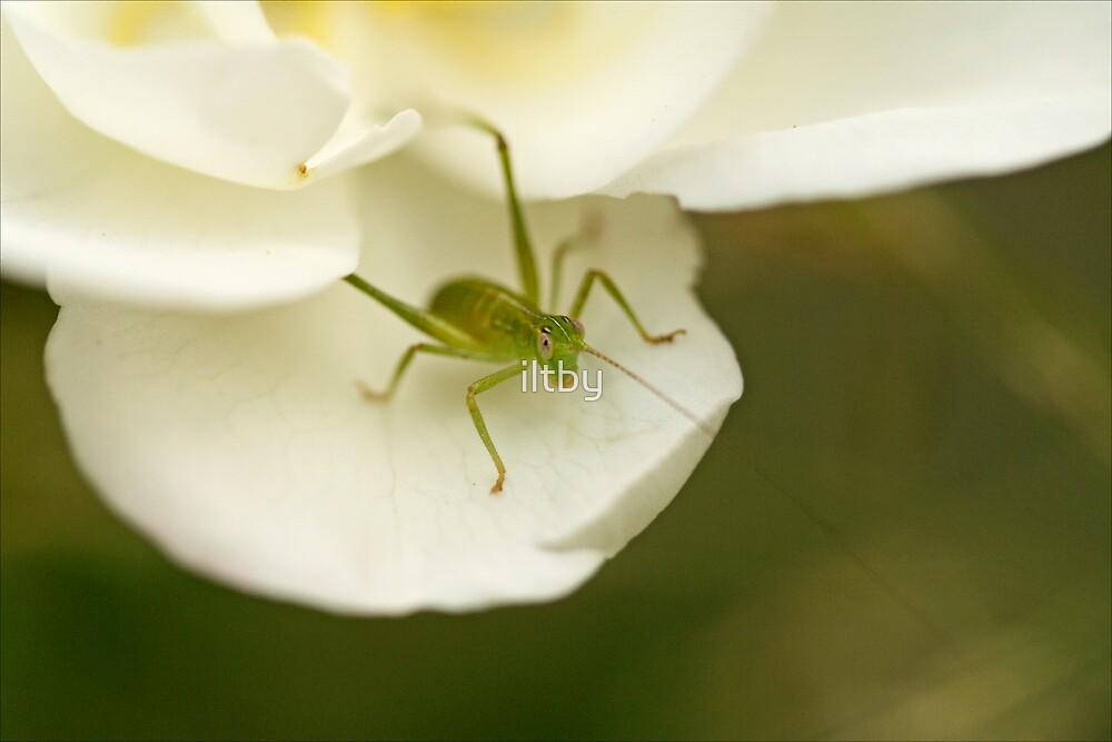 Cute as a Bug's Ear by iltby