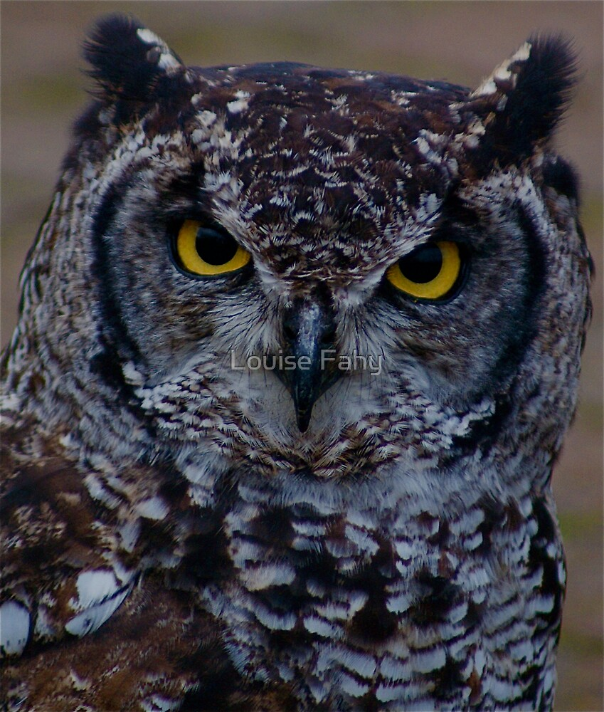 Big Owl II by Louise Fahy