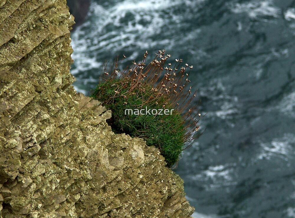 Cliffs Of Moher, Ireland by mackozer