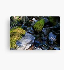 Small Creek  Canvas Print