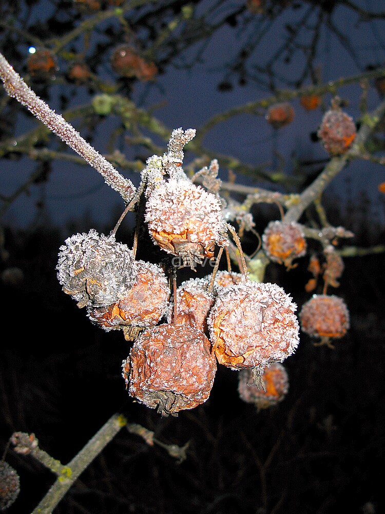 Frozen crabapples by daive