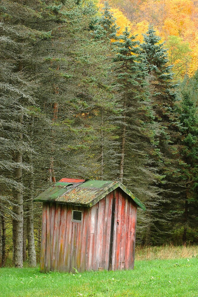 Tioga Autumn by Michael  Dreese