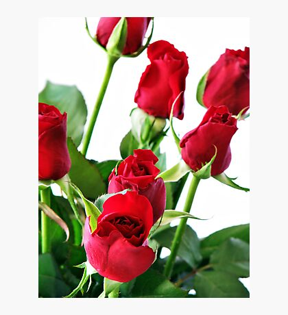 ~ red roses for my love ~ Photographic Print