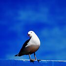 Not just another seagull by oddoutlet