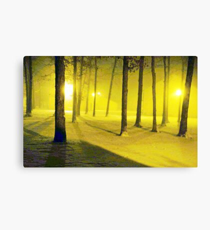 Snow / Bathed In  Golden Light    Canvas Print