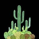 Beautiful Green Cacti Succulent on Black Design by DesertDecor