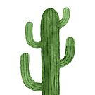 Beautiful Green Cacti Succulent on White Design by DesertDecor