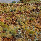 Pilbara Outlook by Harry Oldmeadow