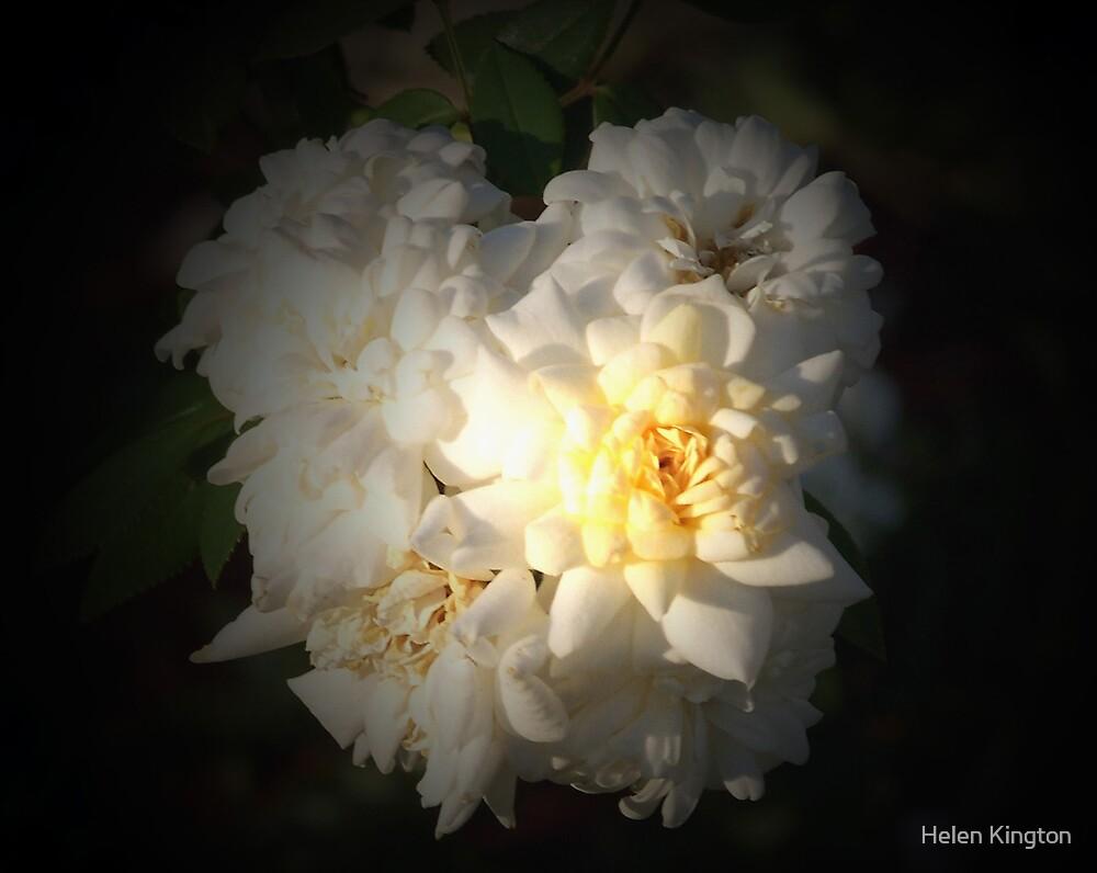 Spotlight Bloom by Helen Kington