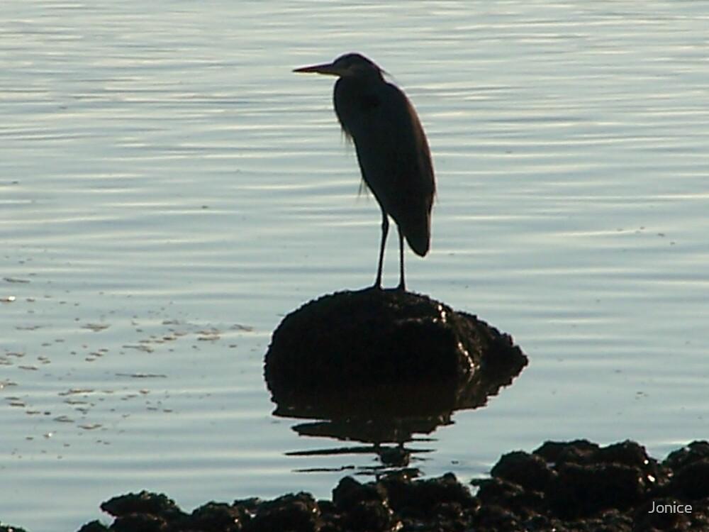 The Blue Heron Awaits by Jonice