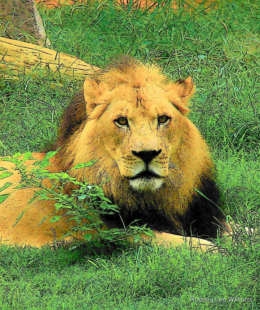 Lion by Rodney Lee Williams