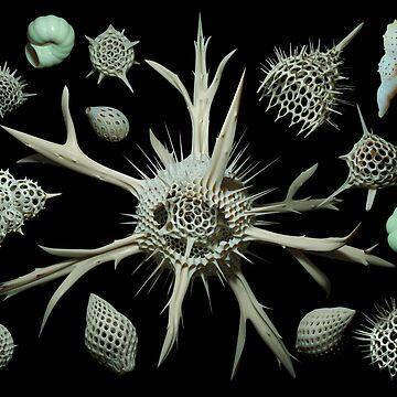 Radiolaria y foraminíferos de Ldarro