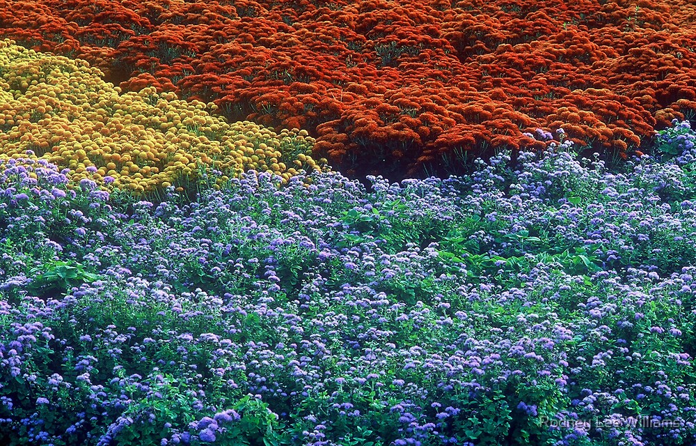 Merging Colors by Rodney Lee Williams