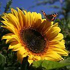 Butterfly & Sunflower by Martina Fagan