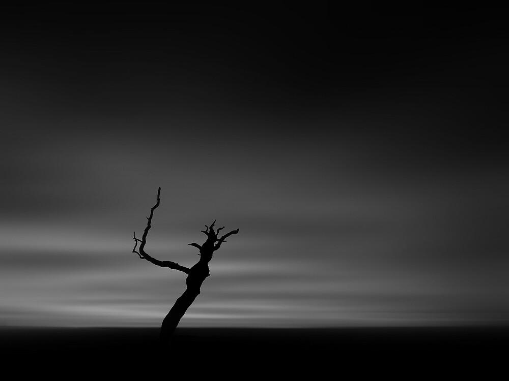 Burnt Tree Dawn B&W by bluefinart