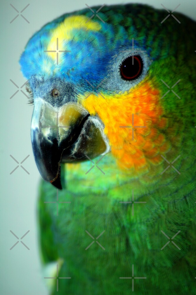 Pretty Bird by Angie Seiffert