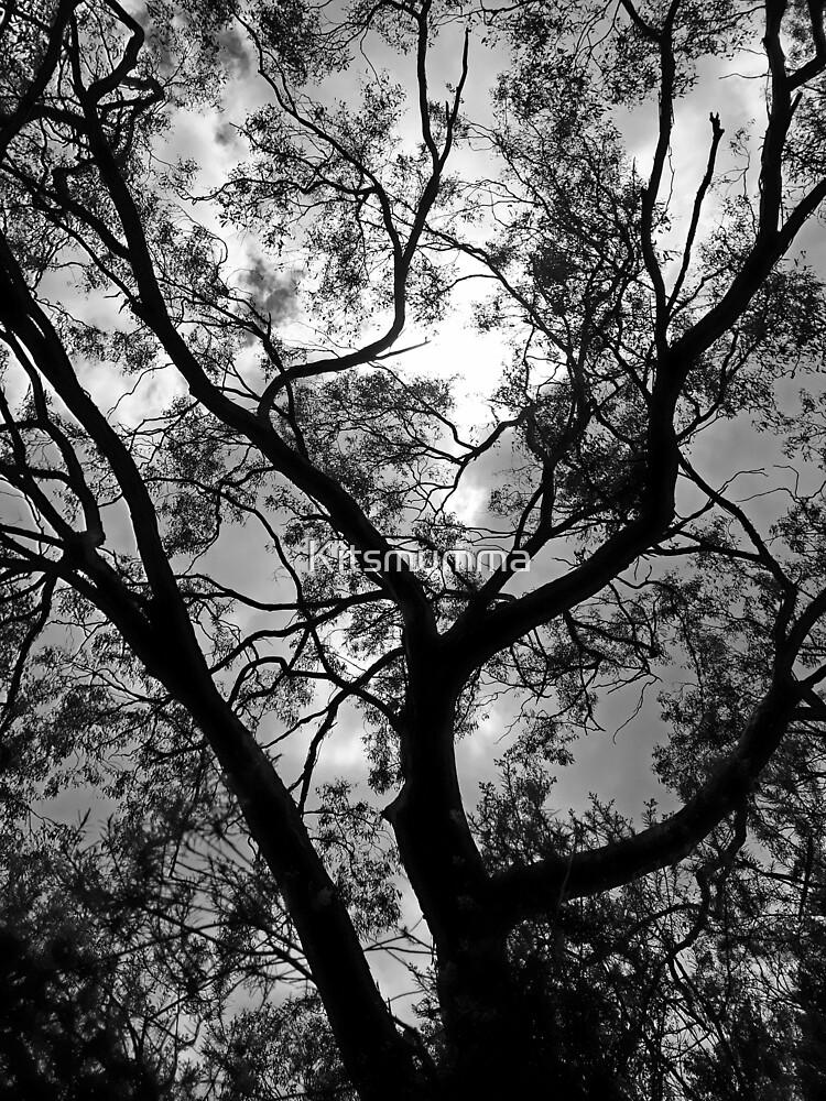 Mount Yarrowyck Tree by Kitsmumma