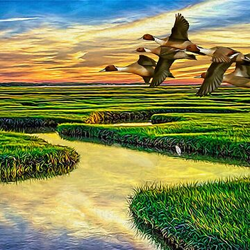 Pintail Ducks  by Skyviper