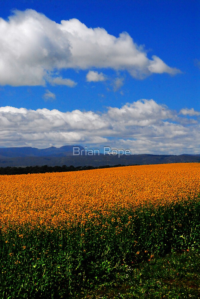 Northern Tasmanian Landscape by Brian Rope