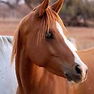 HORSE BEAUTY by Magriet Meintjes