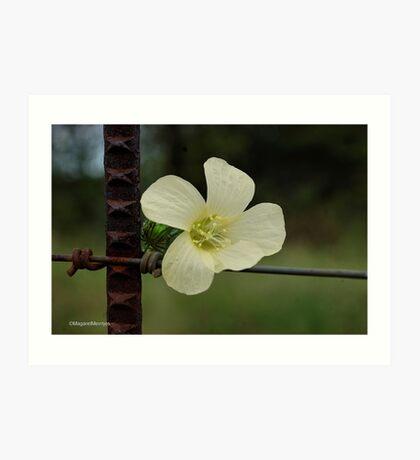 CONTRASTS IN SPRING - WILD FLOWERS Art Print
