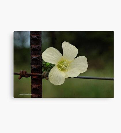 CONTRASTS IN SPRING - WILD FLOWERS Canvas Print