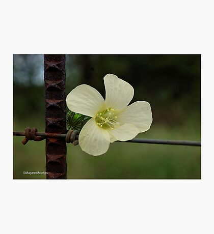CONTRASTS IN SPRING - WILD FLOWERS Photographic Print
