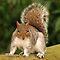 Your Favourite Squirrel Image