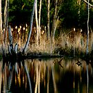 Spring Reflections by Wayne King