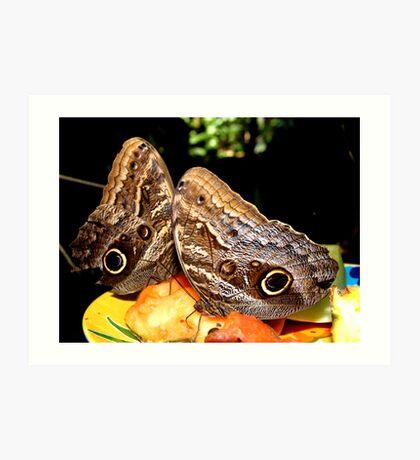 Owl Butterflies Art Print