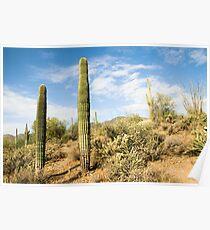 Hiking trail running through various cacti in the Arizona desert.  Poster