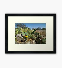 Catus Flower Blooms. Framed Print