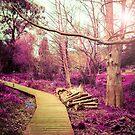 Magic Forest by ChristosMavros