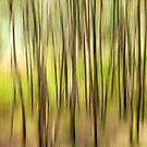 Abstract Woodland by Chris Owens