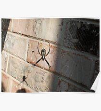 Itsy Bitsy Spider Poster