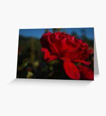 Velvety Red Rose  Greeting Card