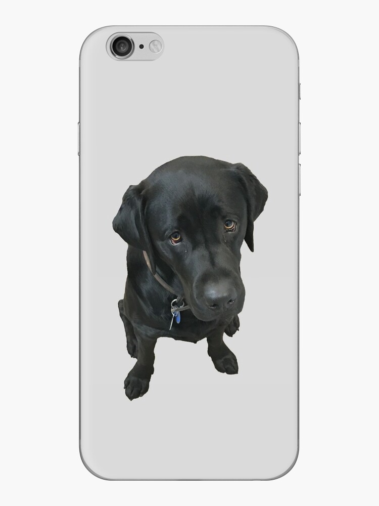 Black Labrador by Finbar Gallaway