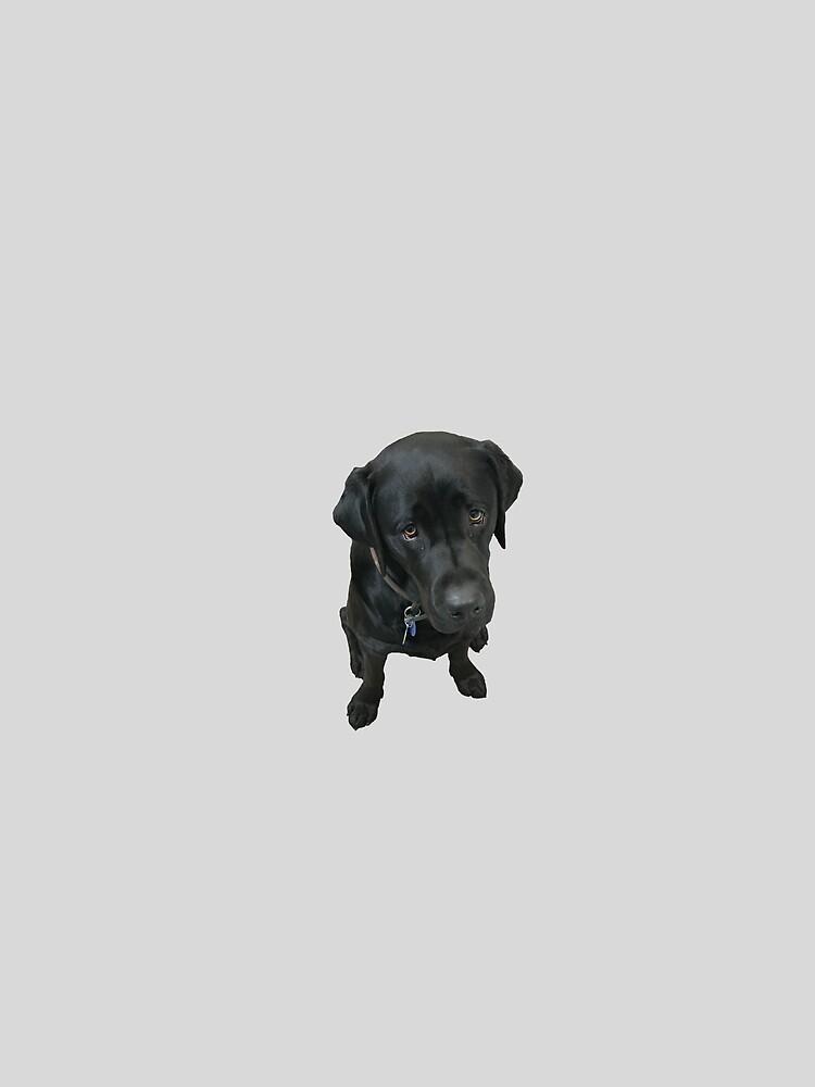 Black Labrador by fgallaway